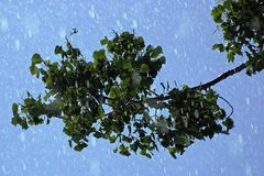 Raining On Leaves. Leaves are getting wet from falling rain Stock Photography