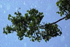 Raining On Leaves stock photography