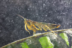 Raining mantis Royalty Free Stock Photos