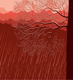 Raining nature landscape with tree in evening Royalty Free Stock Images