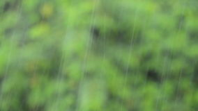 Raining with plants and tree leaves in background stock footage