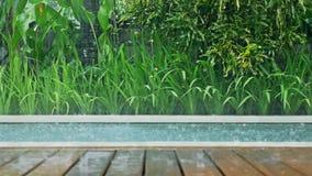 Raining Pool Tropical Dolly Slowmotion. Slowmotion footage of rain falling into a pool stock video footage