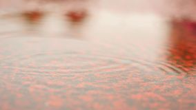 Raining on racetrack in campus stadium. Water on ground.  Red texture of running racetrack under mirror water level, red rubbe. R in outdoor stadium stock footage