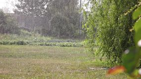 Raining recorded during a sunny day. Vegetable garden in the background stock footage