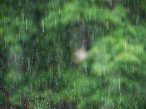 Raining and tree background Stock Images