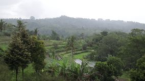 Raining in the tropical rainforest of Bali island, Indonesia. Raining in the tropical rainforest of Bali island stock video footage