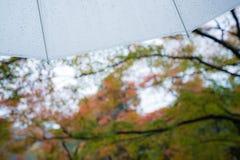 Raining on umbrella background autumn trees Royalty Free Stock Images