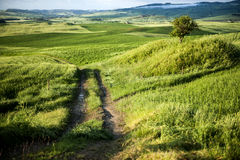 After rainning in tuscany. Italy Stock Photos