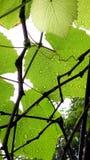 Rainny day Stock Image