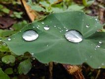 Rainny Stock Image