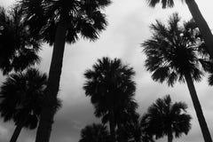 Rainny palmy obrazy stock