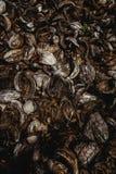 Coconut field in brazil royalty free stock image