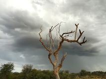 Too late for some. Rains behind a dead tree Stock Images