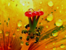 Rains. Bring smile to plants and garden Stock Photography