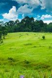 Rains meadow Stock Photography