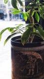 When it rains it pours. Rains pours plant pot green stock images