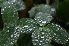 Rainshine Royalty-vrije Stock Afbeeldingen
