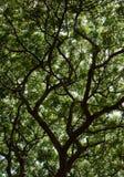 Raintree4 Στοκ φωτογραφίες με δικαίωμα ελεύθερης χρήσης