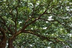Raintree2 Στοκ Εικόνες