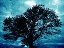 Raintree Στοκ Εικόνα