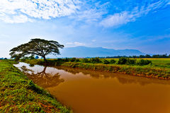 Raintree, Paddy Field and Irrigation Canal Royalty Free Stock Photos