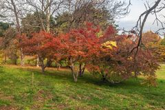 Rainy autumn in the Arboretum of Sochi. Russia. Arboretum is a Unique and Famous Landmark in Sochi. Park Arboretum in Sochi deservedly has the status of a Stock Photography
