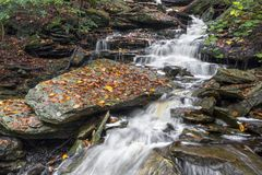 Rainy Autumn Day in Ganoga Glen Stock Photos