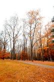 Rainy autumn Royalty Free Stock Images