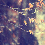 Rainy autumn leaves on branch Stock Photo
