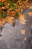 Rainy autumn Stock Images
