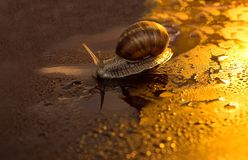 A rainy autumn night. Nightlife of a snail - snail crawling in the rain, colours of the night