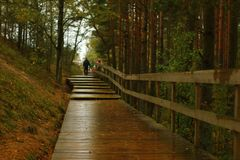 Wooden boardwalk at rainy day stock photography