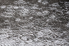 Rainy background with water circles Royalty Free Stock Image