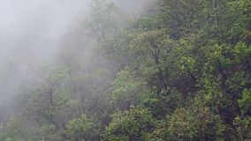 Rainy cloud and the hill. Rainy cloud flow slowly cover the tropical rain forest on the hill stock video