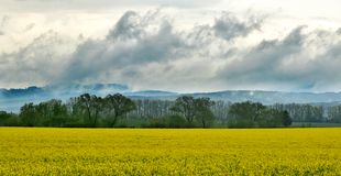 Rainy clouds above canola fields stock images