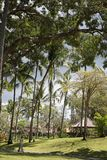 Rainy clouds over the beautiful tropical garden. Rainy season, rainy clouds over the beautiful tropical garden Royalty Free Stock Photos