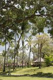 Rainy clouds over the beautiful tropical garden. Rainy season, rainy clouds over the beautiful tropical garden Stock Photo