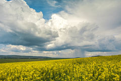 Rainy clouds over the fields of rapes. The rain starts just over the fields of oilseeds Royalty Free Stock Photos