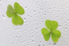 Rainy clover leaf on white umbrella Stock Image