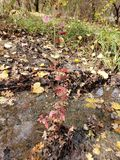 Rainy Creek royalty free stock images