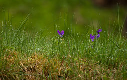 Rainy day. Nature, awakened by a cold morning shower Royalty Free Stock Photography