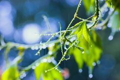 Free Rainy Day Royalty Free Stock Images - 4721519