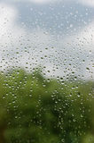 Rainy Day. Rain drops on a window Stock Photography