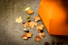 Rainy day - autumn concept Stock Photography