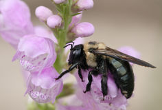 Rainy Day Bee royalty free stock images