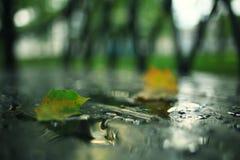 Rainy day in city park Stock Photos