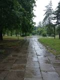 Rainy day. Empty street. Early morning. Raining. Spring. Zaporizhzhya Royalty Free Stock Photography