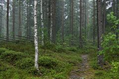 Rainy day at Finnish countryside Stock Images