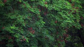 Rainy day in forest. Trees leaves video stock footage