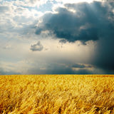 Rainy day and harvest Stock Photography